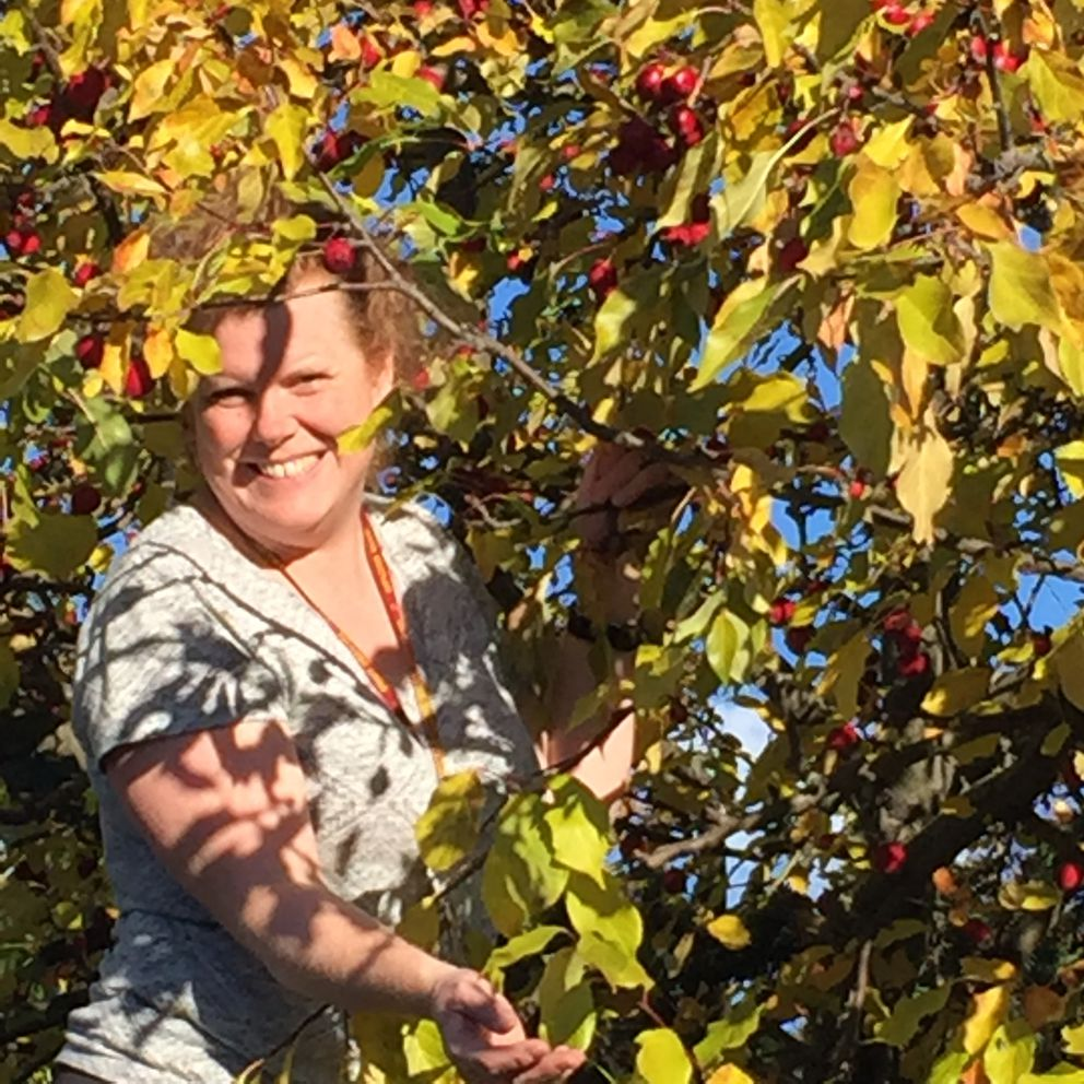 Jennifer McGovern picks crab apples in South Anchorage in September, 2016. (Photo by Kim Sunée)
