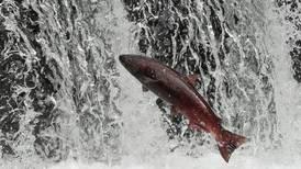 Alaska, Canada must safeguard fisheries from B.C. mining operations