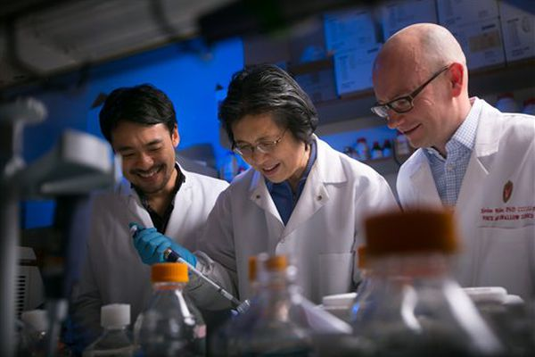 This photo provided by John Maniaci/UW Health, taken Nov. 16, 2015, shows Dr. Nathan Welham, right, visiting scientist Kohei Nishimoto, left, and associate scientist Changying Ling working in the Welham Lab at the Wisconsin Institute for Medical Research in Madison, Wis. Welham and his team have bio-engineered vocal chords that can generate a voice in humans.