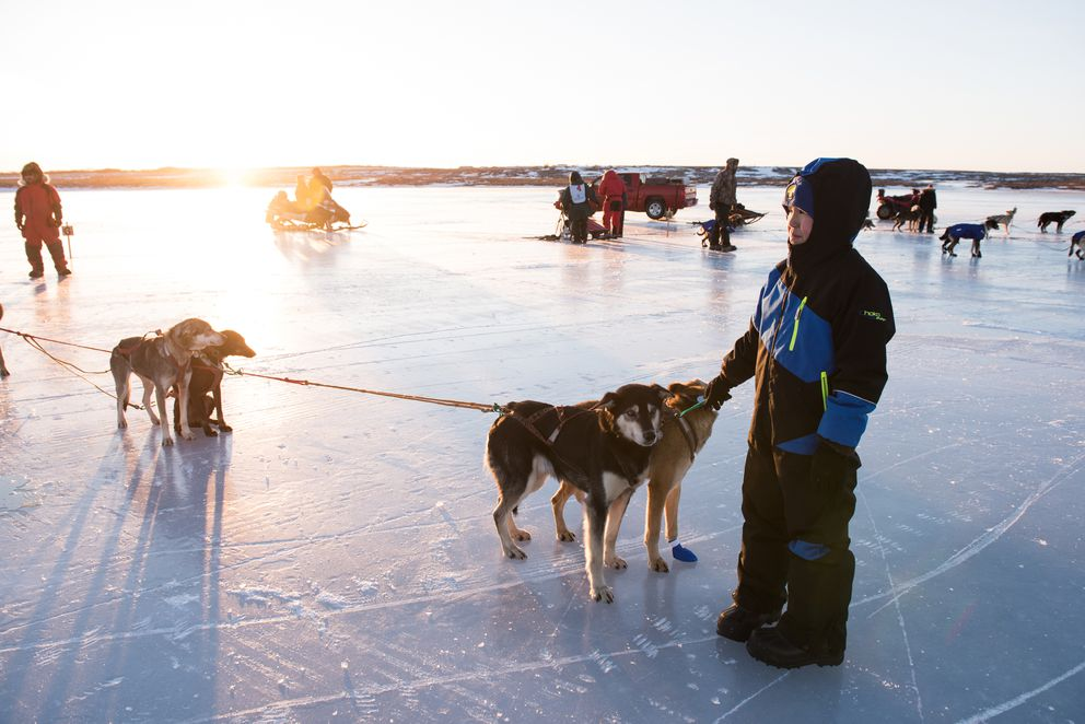 A young volunteer assists mushers running the Bogus Creek 150 on Friday, January 19, 2018. The Bogus Creek 150 is one of the shorter races run during the K300 weekend and starts just before the main event, the Kuskokwim 300. (Katie Basile / KYUK)