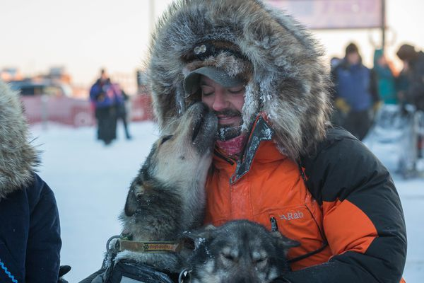 Peter Kaiser gets a kiss from his lead dog Palmer after Kaiser won his third straight Kuskokwim 300 sled dog race Sunday, Jan. 22, 2017 in Bethel. His other lead dog is Mosley. (Loren Holmes / ADN)