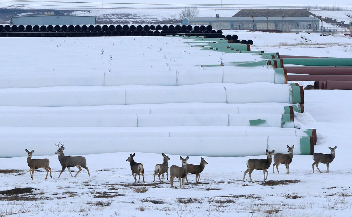 FILE PHOTO: Deer gather at a depot used to store pipes for Transcanada Corp's planned Keystone XL oil pipeline in Gascoyne, North Dakota, January 25, 2017. REUTERS/Terray Sylvester/File Photo