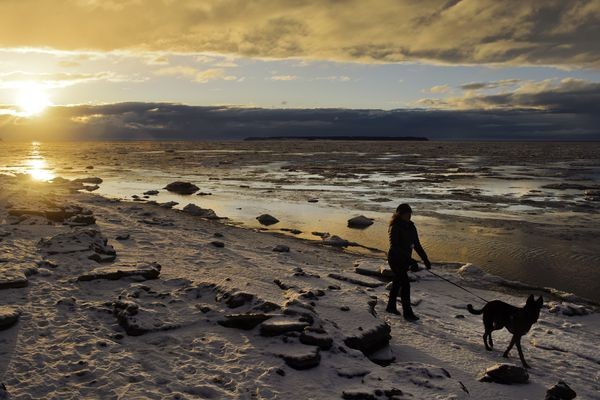 Tatiana Pfaffe walks a friends dog, named Dog, along the shoreline near Point Woronzof during a brief moment of sunshine on Wednesday afternoon, November 25, 2020. (Marc Lester / ADN)