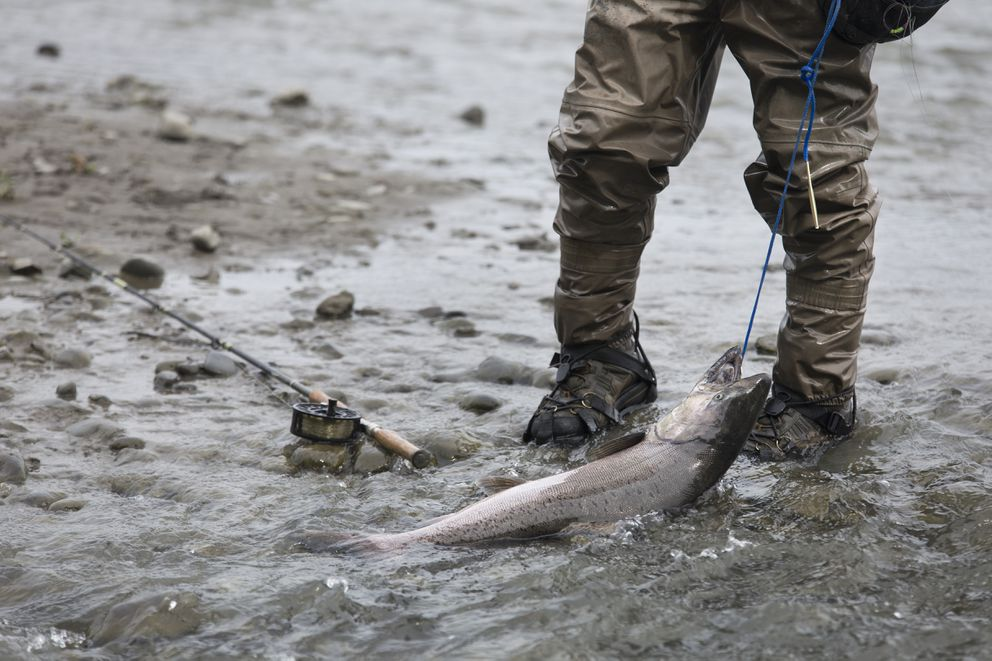"""Steve Wottlin tows a salmon caught during the Slam'n Salm'n Derby onShip Creek in Anchorage. """"Oh man, finally caught one"""" said Wottlin. """"I've been catching these fish since I was a kid. It's always fun."""" (Rugile Kaladyte / Alaska Dispatch News)"""