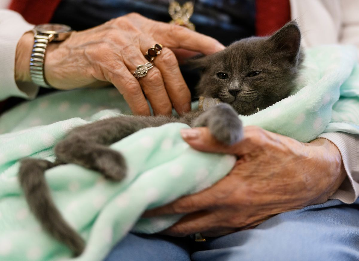 Providence Horizon House resident Lucille Castro holds a 7-week-old kitten named Dandy. (Marc Lester / ADN)
