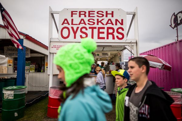 The Pristine Products booth at the Alaska State Fair in Palmer serves oysters from Prince William Sound. August 28, 2014. (Loren Holmes / Alaska Dispatch News)