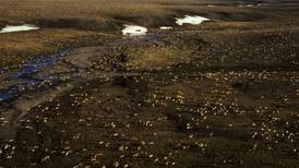 Alaska agency proposes spending $1.5M on plans to search for oil in Arctic refuge, even after Biden administration suspended leases