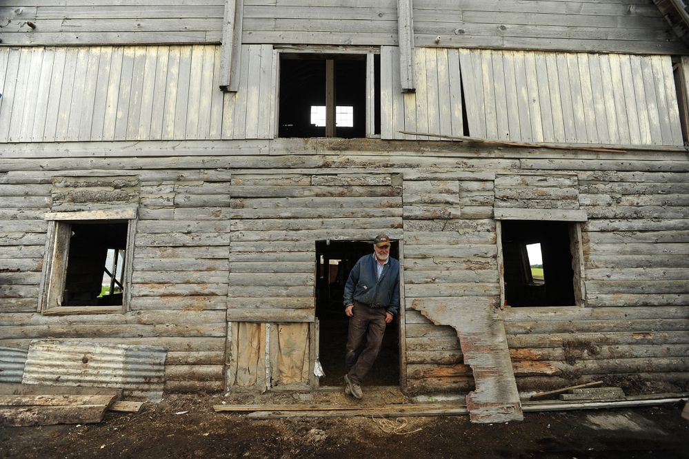 Mike Stitt is restoring the Colony barn on the Tracy Moffitt farm in Palmer, Alaska on Wednesday August 16, 2017. (Bob Hallinen / Alaska Dispatch News)