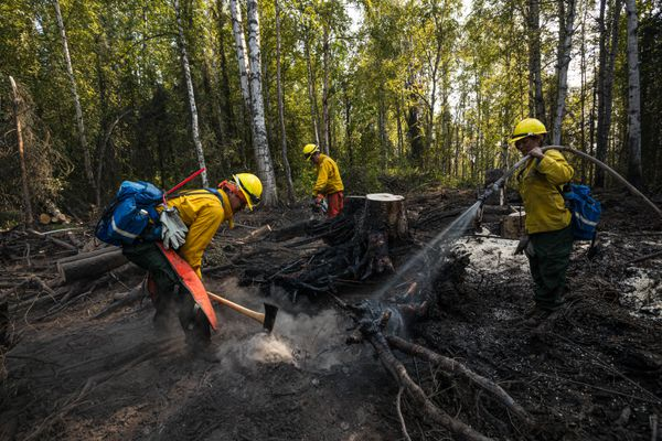 Members of the Yukon Flats crew reinforce the fire line on the McKinley fire, south of Merlin Drive, Friday, Aug 23, 2019. They're mopping up, north of Willow, taking the heat out of any fuel that is left on the edge of the fire. From left to right: Pierre Tremblay, Jr., Daylon Jones and Minnie Peter, all from Fort Yukon. (Loren Holmes / ADN)