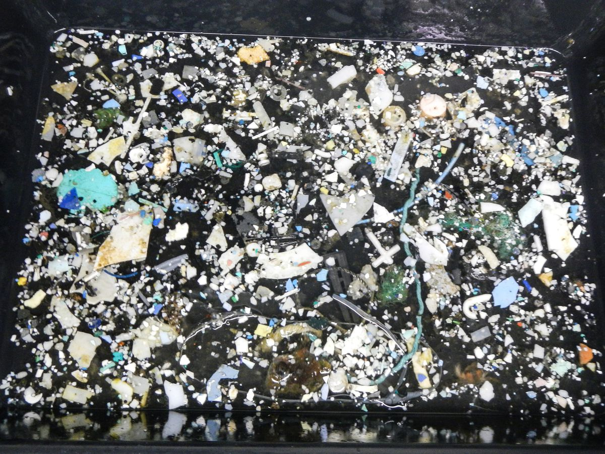 A sampling of plastic from the Great Pacific Garbage Patch. (Photo courtesy of Ocean Cleanup Foundation)