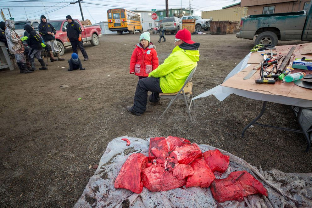 Harvard Brown and his daughter, Bergeta, were among the members of the Quuniq Crew preparing to feed the Utqiagvik community from the first bowhead whale of the fall season Monday, Oct. 8 2018. Normally, snow covers the ground by late September in Alaska's farthest-north city, which used to be called Barrow. (Photo by Bill Hess)