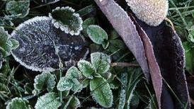 Don't wait: Get your garden ready for the first frost