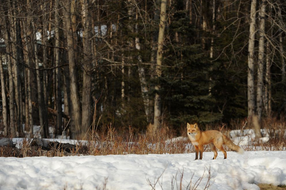 Along the bike path. (Bob Hallinen / ADN)
