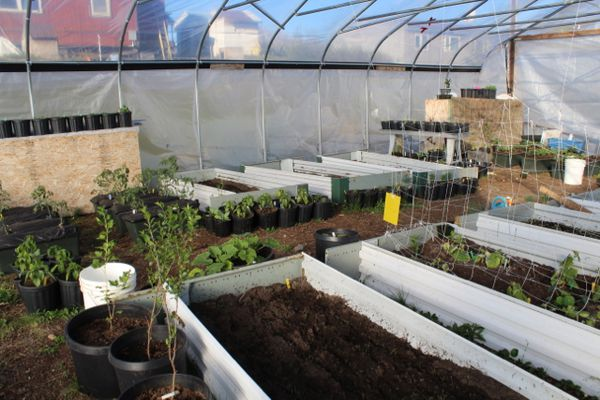 The high tunnel at Gardens in the Arctic is packed to the brim with plants this summer. (Courtesy Nasuġraq Rainey Hopson)