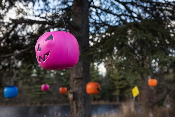 Jack-o'-lanterns hang from a tree along Basher Drive in East Anchorage on Wednesday, Oct. 23, 2019. (Loren Holmes / ADN)