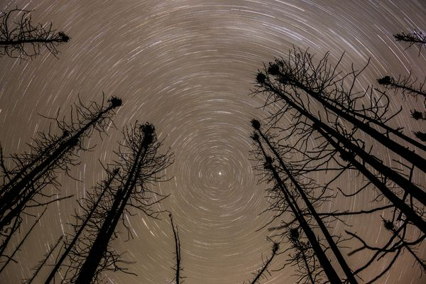 Star trails spin above spruce trees burned earlier this summer during the Sockeye Fire in Willow, during this 1 hour long exposure on Sunday, September 20, 2015. The Sockeye Fire burned an estimated 55 homes in the area.