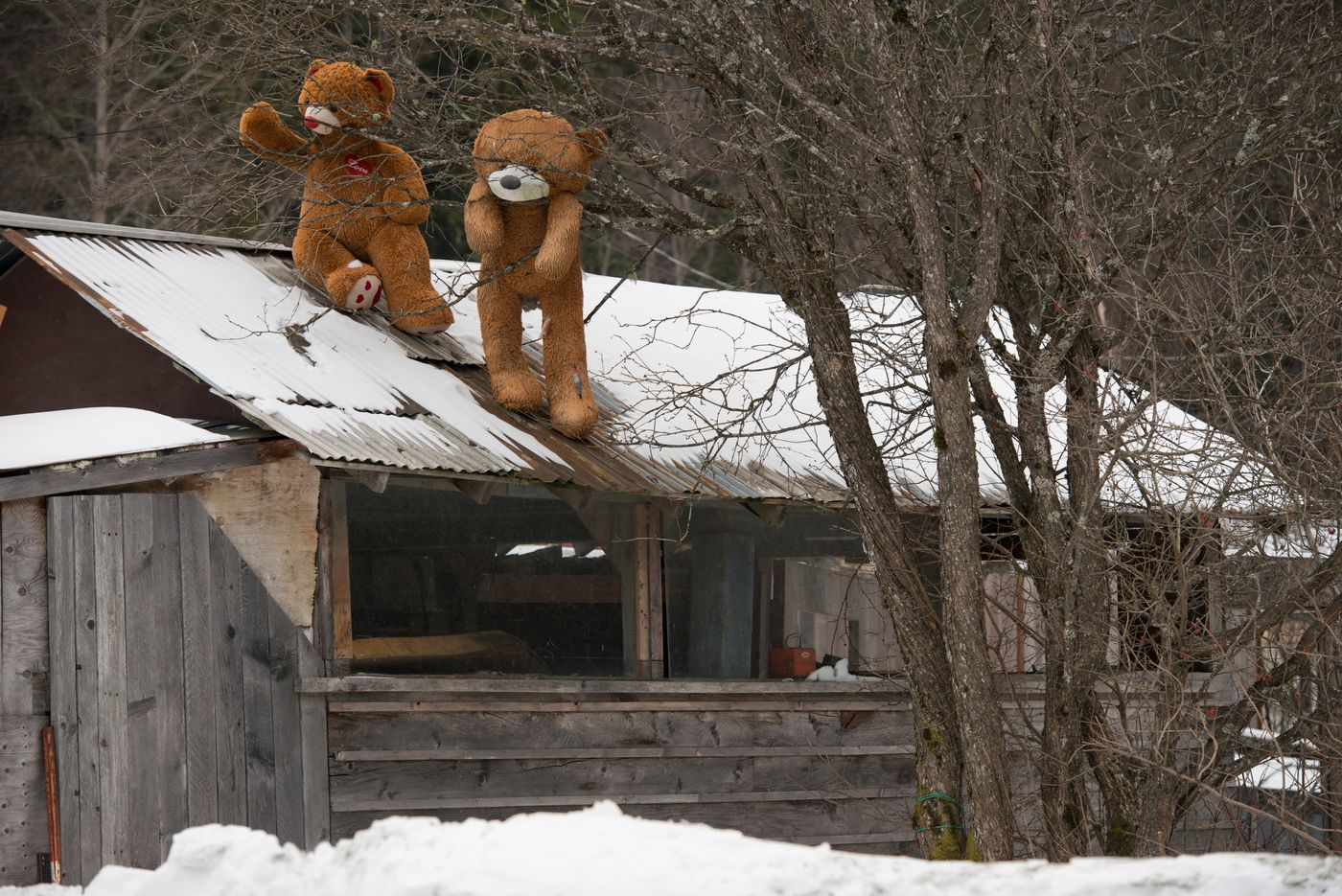 Large stuffed bears decorate a rooftop in Haines on January 22, 2017. (Marc Lester / Alaska Dispatch News)