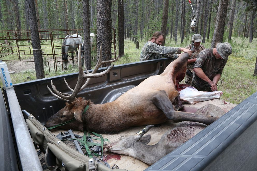 Duane Ryckman, left, of Lincoln, N.D., Scott Robarge of La Grande, Ore., and Darrin Ryckman of Burns, Ore., skin an elk and a deer they hunted in Montana's Beaverhead-Deerlodge National Forest. Washington Post photo by Whitney Shefte