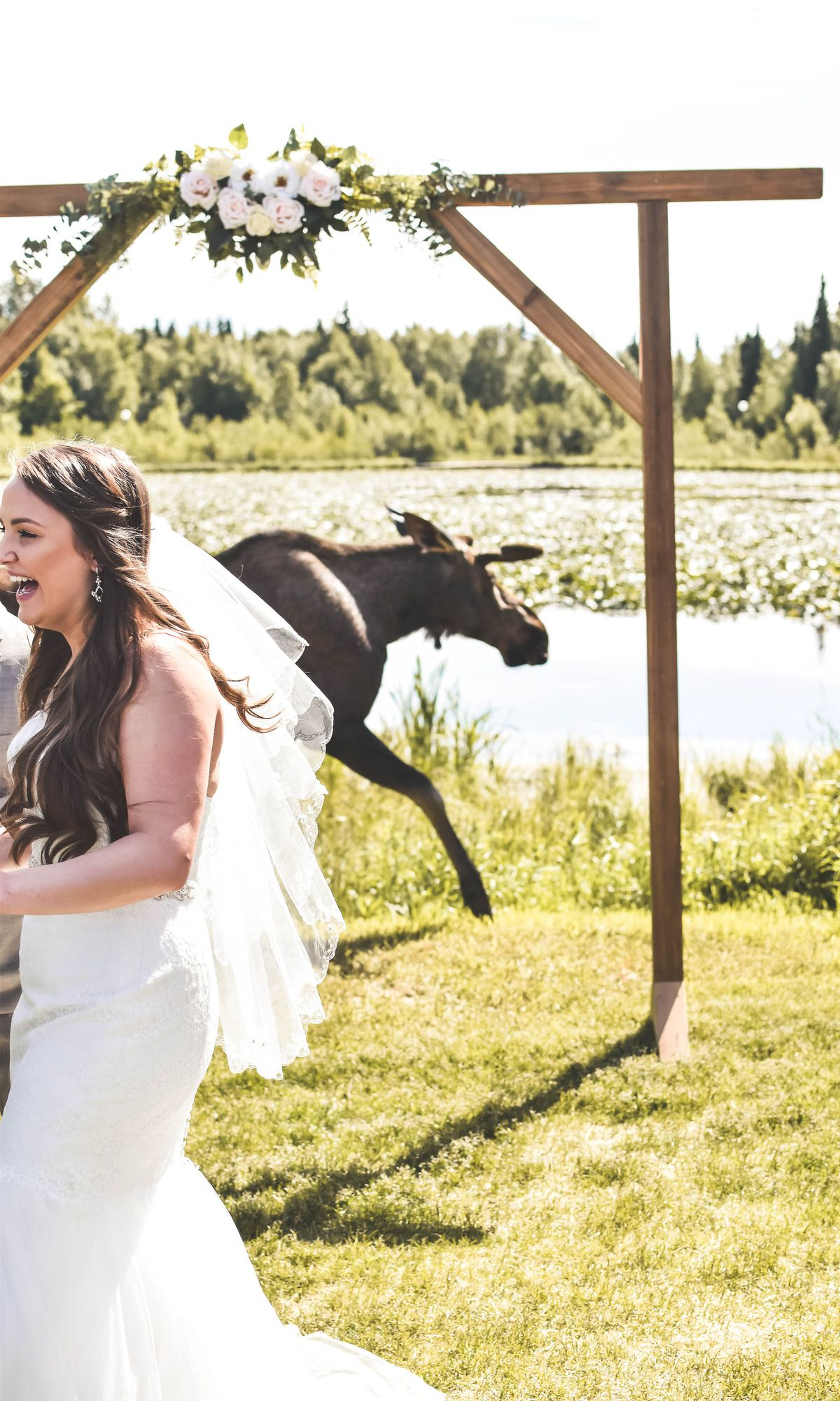Shanalyn and Alan Cuellar were in the middle of their wedding ceremony at South Anchorage's Bayshore Clubhouse when a moose showed up. (Photo courtesy Bria Celest)