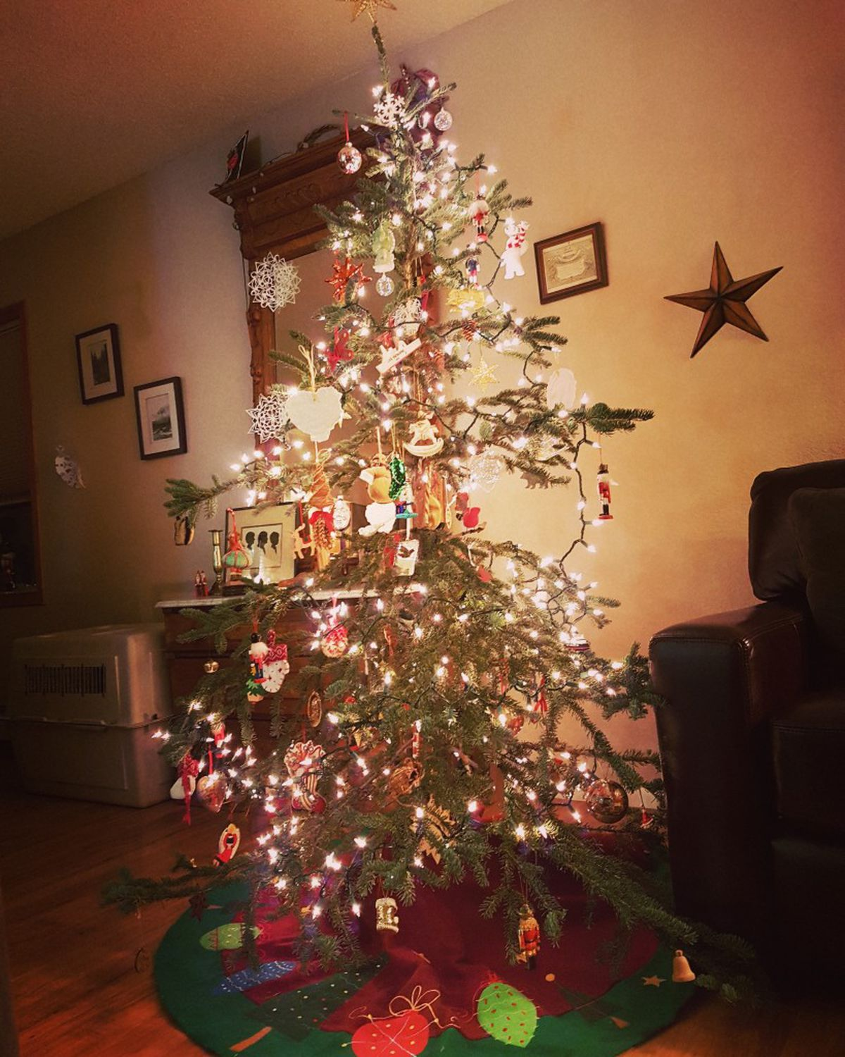 A recent Christmas tree at the Kirkland home, fresh from the Chugach National Forest. (Erin Kirkland)