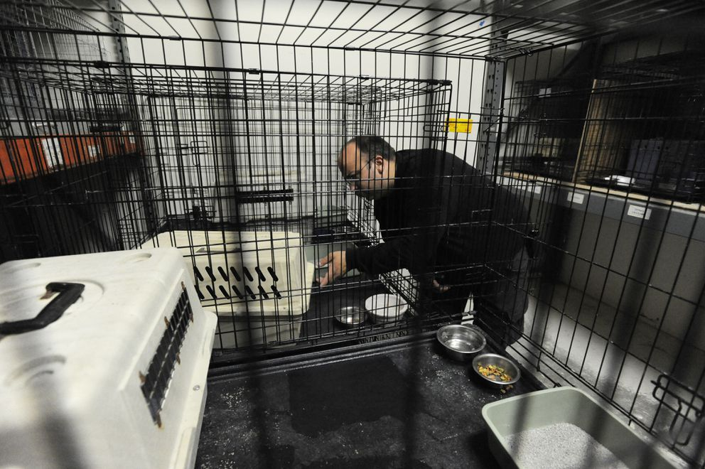 Houston Fire Chief Christian Hartley tends to six of 30 feral cats remaining at the Houston Animal Shelter on Sept. 7. (Bill Roth / Alaska Dispatch News)
