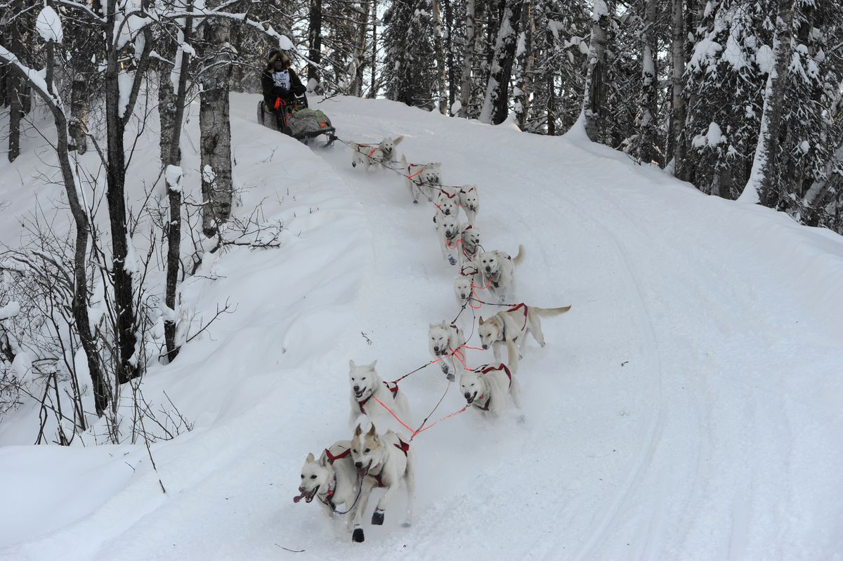 Jim Lanier drives his dog team down Corral Hill during the restart of the Iditarod Trail Sled Dog Race in Willow on March 4. (Bill Roth / ADN)