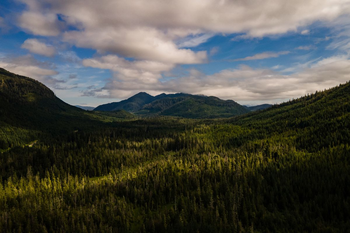 The Biden administration announced sweeping protections for Tongass National Forest, seen here on Prince of Wales Island, Alaska, on July 2. MUST CREDIT: Washington Post photo by Salwan Georges
