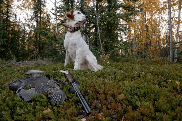 Cogswell, with the three species of grouse he found in a single day of upland hunting - a spruce grouse, sharp-tailed grouse, and ruffed grouse in September 2017. (Steve Meyer)