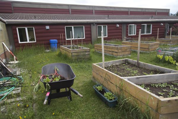 A garden is available for residents to grow their own fruits and vegetables at the Alaska Veterans and Pioneers Home. Photographed on June 8, 2017. (Rugile Kaladyte / Alaska Dispatch News)