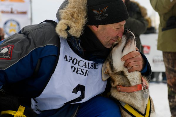 Musher Hans Gatt touches noses with one of his lead dogs. Hans Gatt, of Whitehorse, Yukon, arrived in Fairbanks to place second in the Yukon Quest International Sled Dog Race on February 11, 2019. (Marc Lester / ADN)