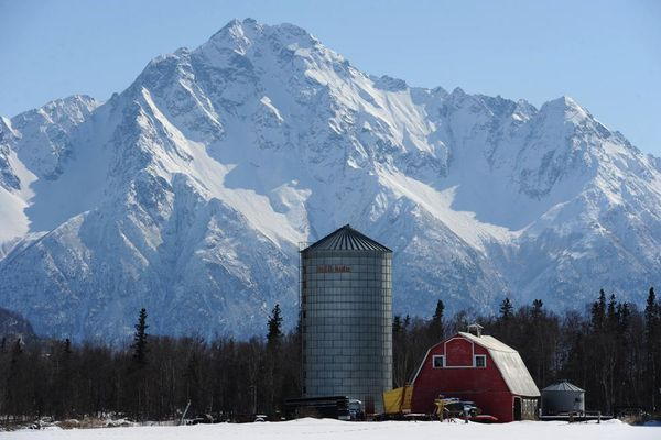 A Colony barn and silo at Tiny Moose Farm in Palmer are dwarfed by Pioneer Peak on Thursday, April 18, 2013.
