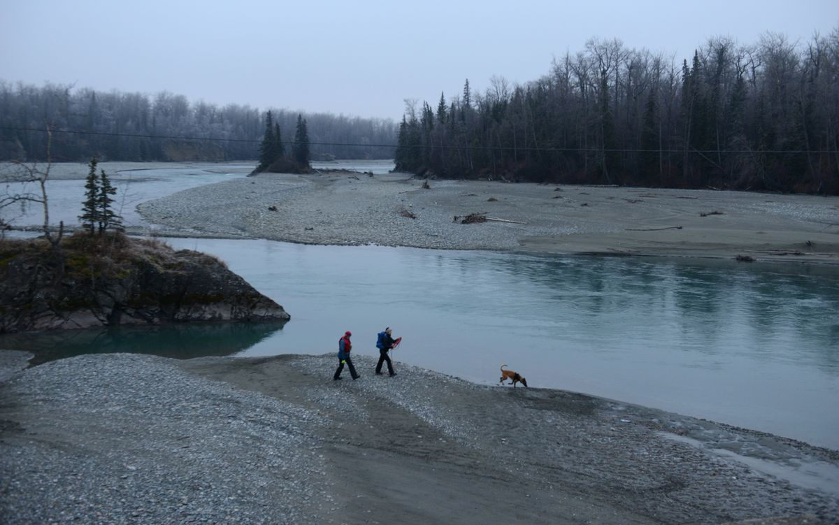 A search and rescue dog and two volunteers search along the bank of the Matanuska River near the Old Glenn Highway bridge for missing person Rachel Lynn Mallard in Palmer, Alaska on Friday, Nov. 3, 2017. (Bob Hallinen / ADN)