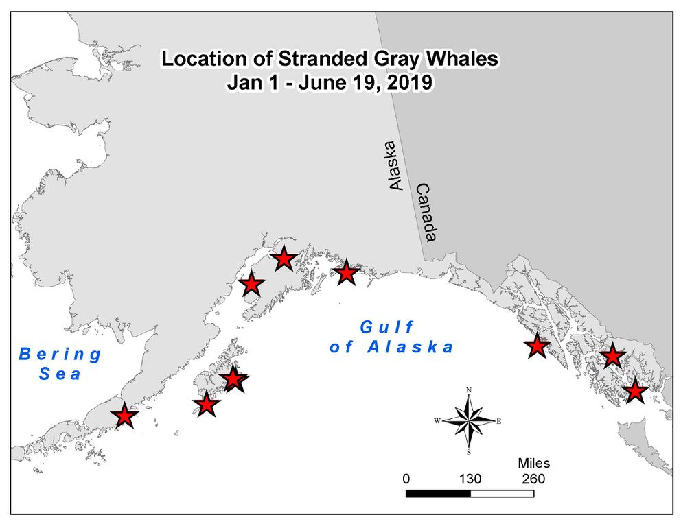 Map indicating locations where dead gray whales have been found in Alaska Jan 1 - June 19, 2019. (NOAA Fisheries)