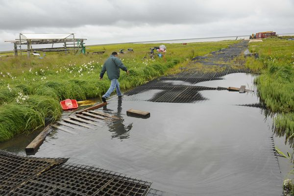 Stanley Tom skirts water on walkways made of mats in the village of Newtok on Aug. 14, 2009. Tom says the eroding Ninglick River and melting permafrost are forcing the village to relocate. (Marc Lester / ADN)