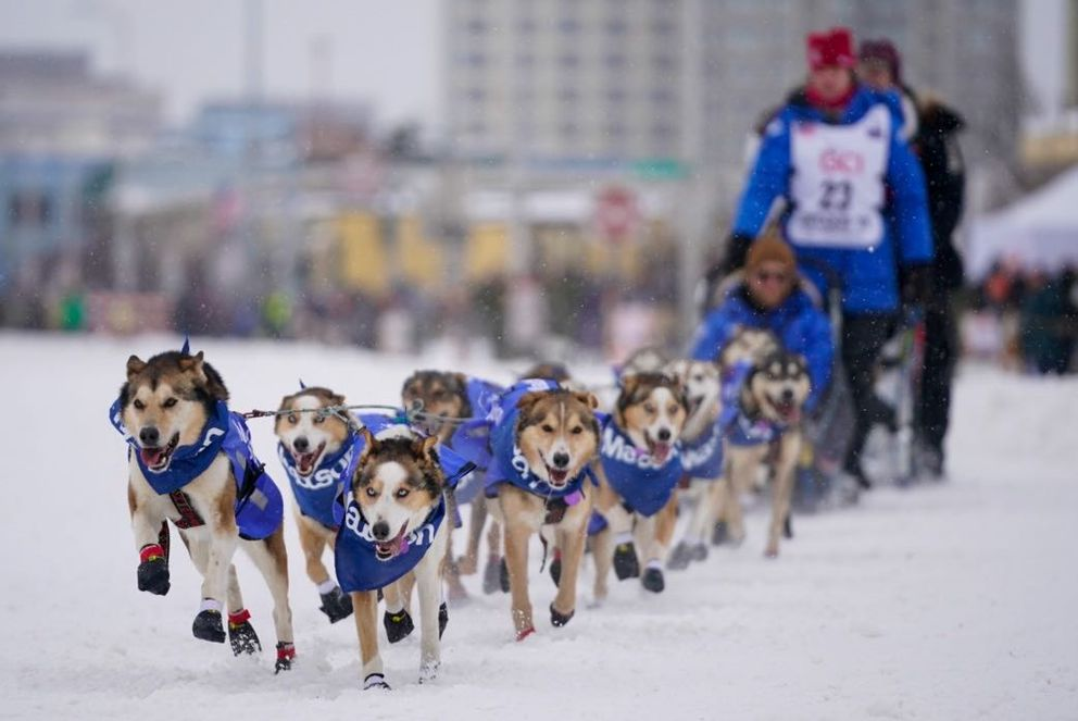 Two Rivers musher Aliy Zirkle and her dog team cruise through Anchorage during the Iditarod Trail Sled Dog Race ceremonial start. (Loren Holmes / ADN)
