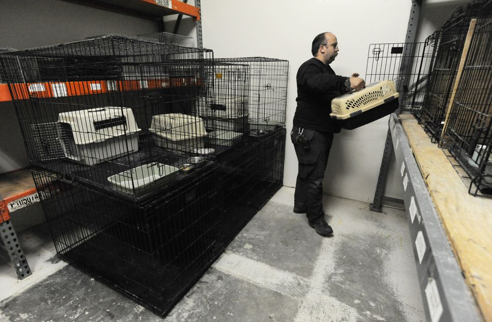 Houston Fire Chief Christian Hartley tends to feral cats at the Houston Animal Shelter. (Bill Roth / Alaska Dispatch News)