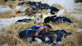 Yukon Quest ends for leaders, but carries on for others