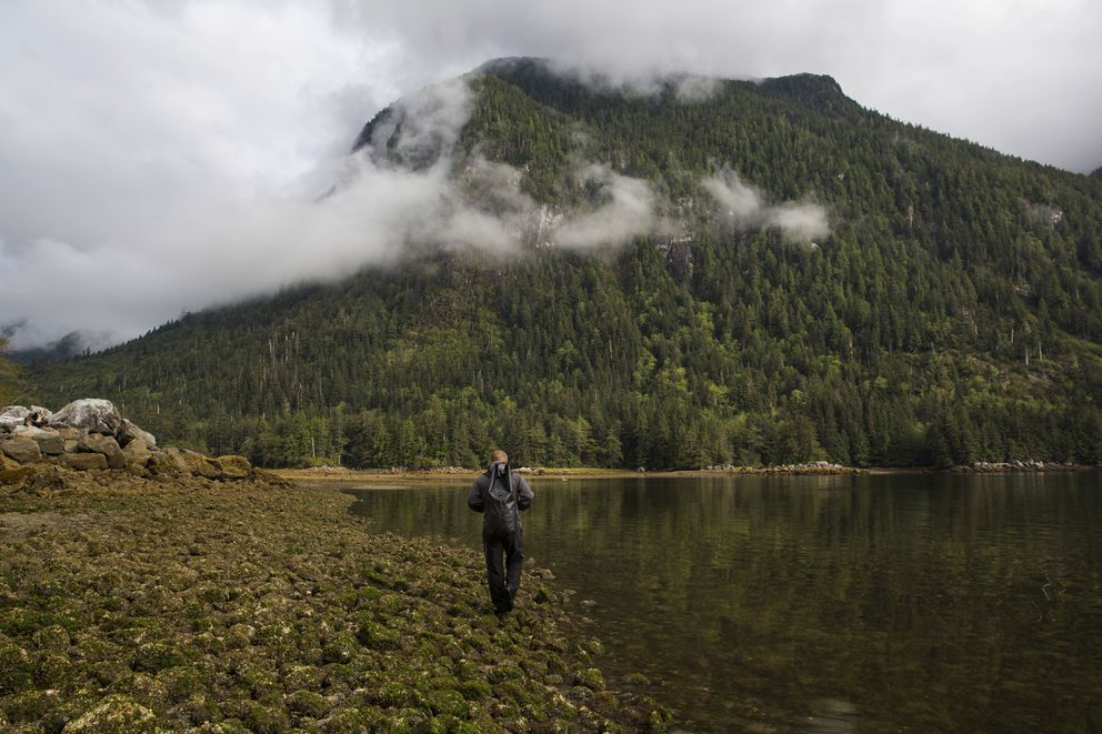 Douglas Neasloss of the Coastal Guardian Watchmen, a Native American patrol, walks along the waters of Bolin Bay in the Great Bear rainforest near Klemtu, British Columbia, Canada, Sept. 4. (Ruth Fremson/The New York Times)