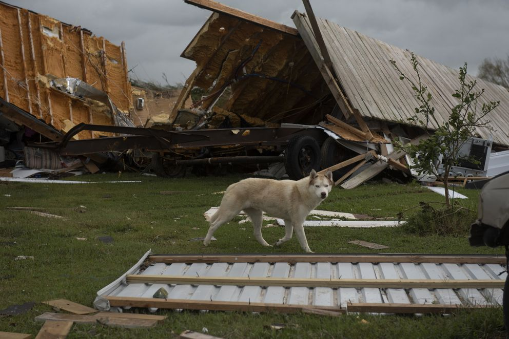 A dog walks past a home in Cameron Parish, La., that was destroyed after Hurricane Laura made landfall. (Photo for The Washington Post by Callaghan O'Hare)
