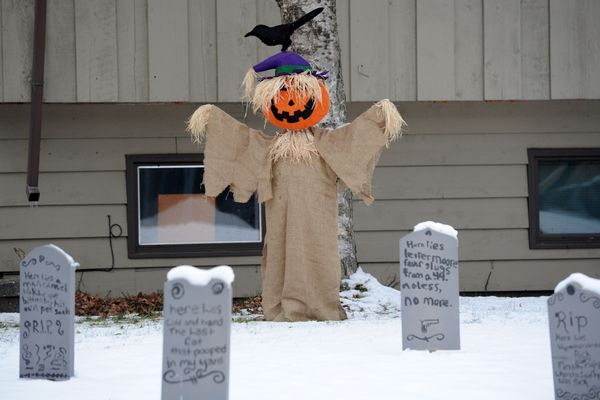 A raven is placed atop a jack-'o-lantern scarecrow in a Halloween tableau along Dartmouth Drive on Friday, Oct. 28, 2016, in Rogers Park. (Erik Hill / Alaska Dispatch News)