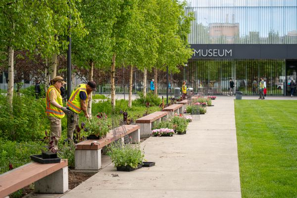 Anchorage Parks employees plant flowers outside the Anchorage Museum on Thursday, June 3, 2021 in downtown Anchorage. (Loren Holmes / ADN)