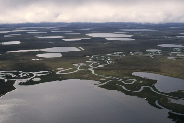 Anne Raup/Anchorage Daily News Lakes dominate the landscape in a northern part of the National Petroleum Reserve - Alaska. 50% of this area of the coastal plane between Barrow and Atqasuk is covered in water. 970709