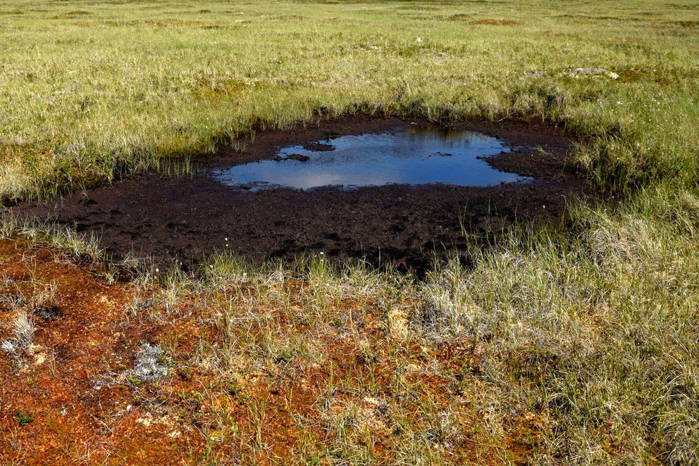 In an undated handout image, a boggy depression in Alaska's vast Yukon Delta National Wildlife Refuge, likely formed when ice in the top layer of permafrost melted. (John Schade via The New York Times)